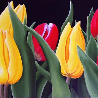 Tulip Grove - Dennis Magnusson
