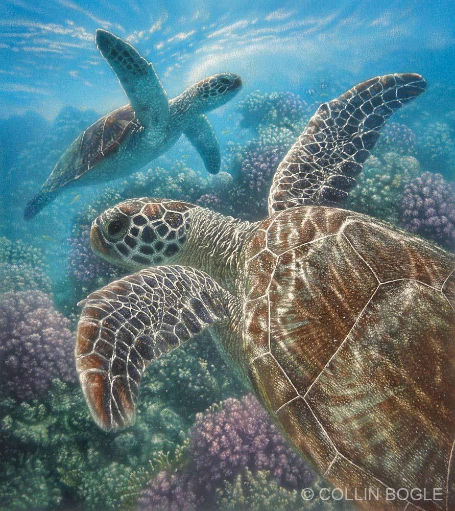 Turtle Bay - Collin Bogle