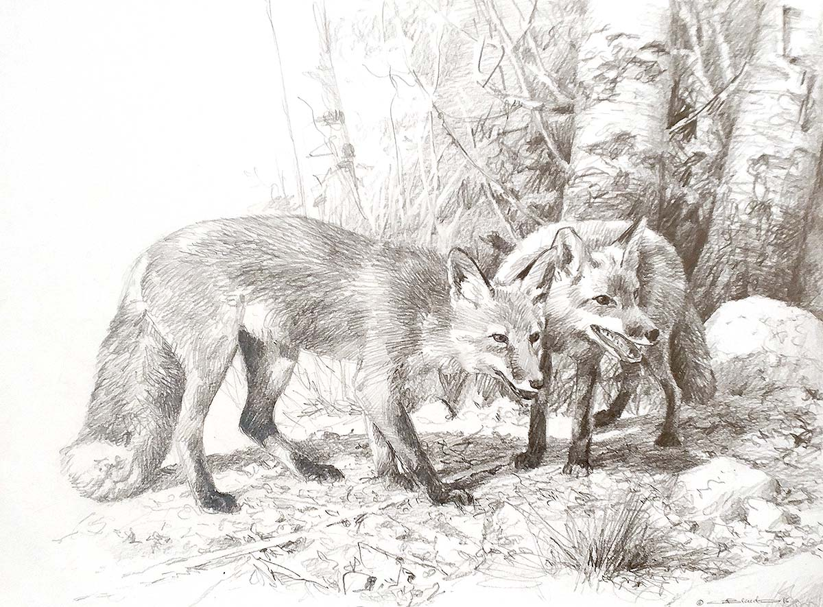 Two Young Foxes (Sketch) - Carl Brenders