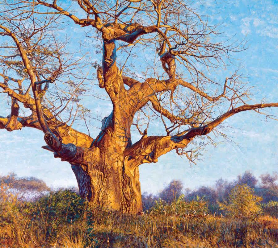 Under The Baobab John Banovich