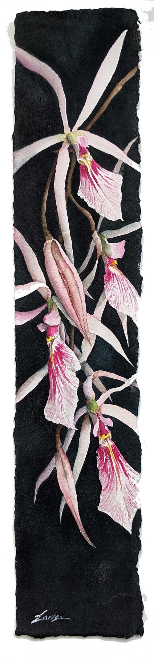 Venezuelan Orchids - Larisa Cheladyn