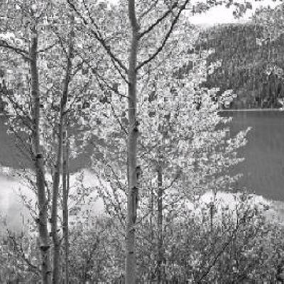 Waterfowl Lake And Aspens Fred Braakman