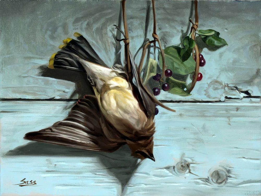 Waxwing - Mike Sass