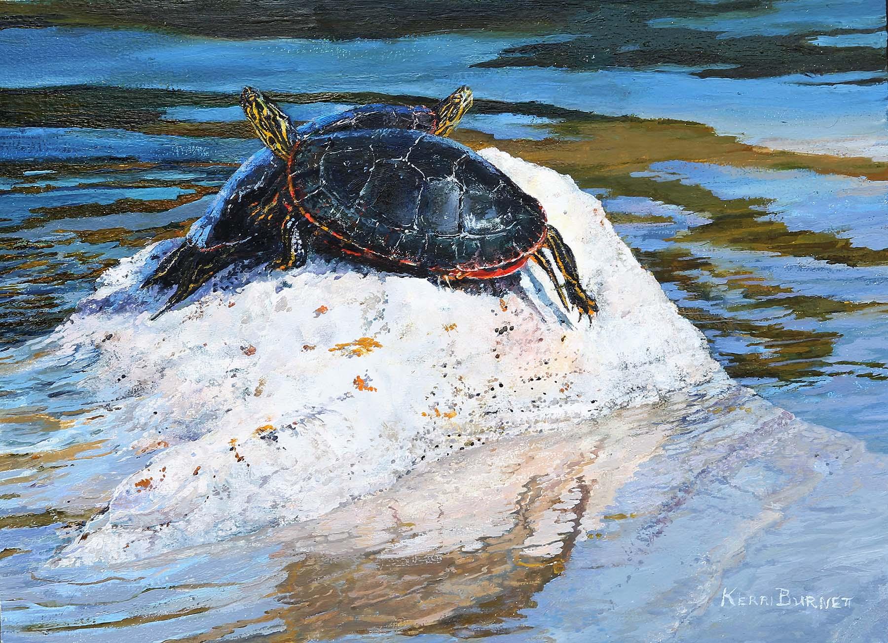 Western Painted Turtles - Kerri Burnett