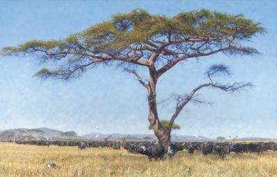 Where the Buffalo Roam - John Banovich