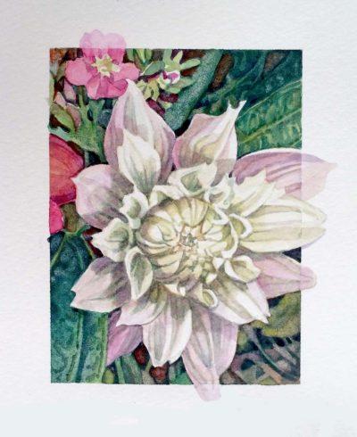 White Dahlia Bud - Nicoletta Baumeister