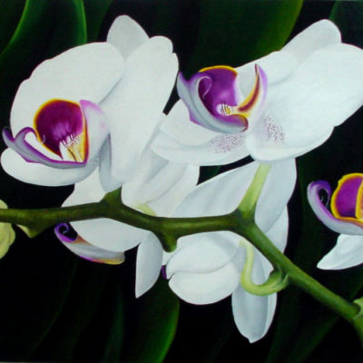 White Orchid Dennis Magnusson