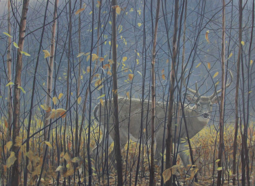 White-tailed Deer Through the Birches - Robert Bateman