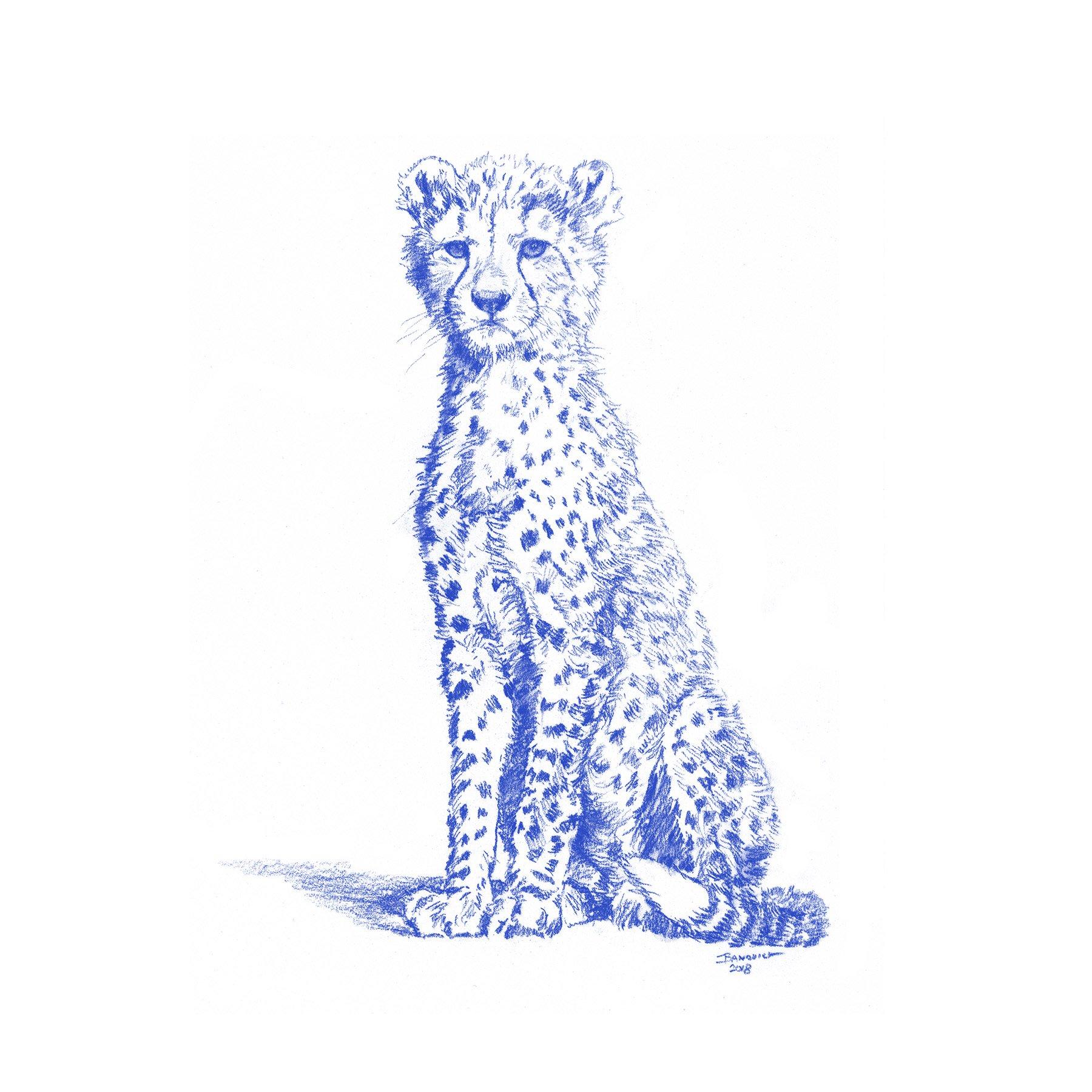 Wild Child - Cheetah - John Banovich