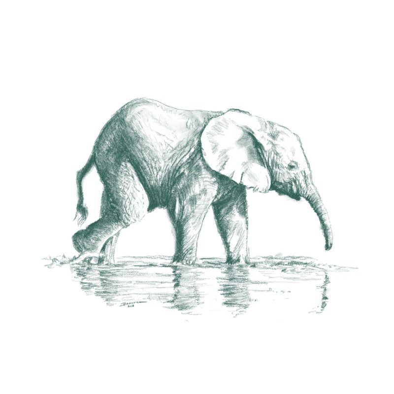 Wild Child - Elephant - John Banovich