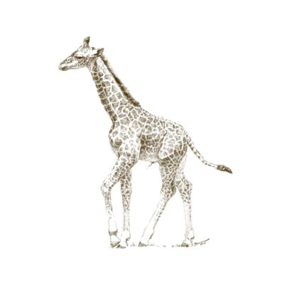 Wild Child - Giraffe - John Banovich