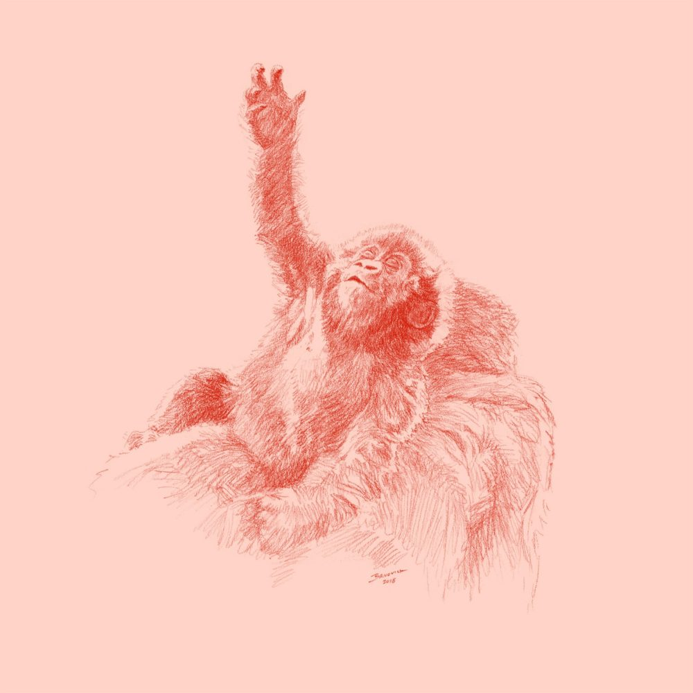 Wild Child - Gorilla - John Banovich