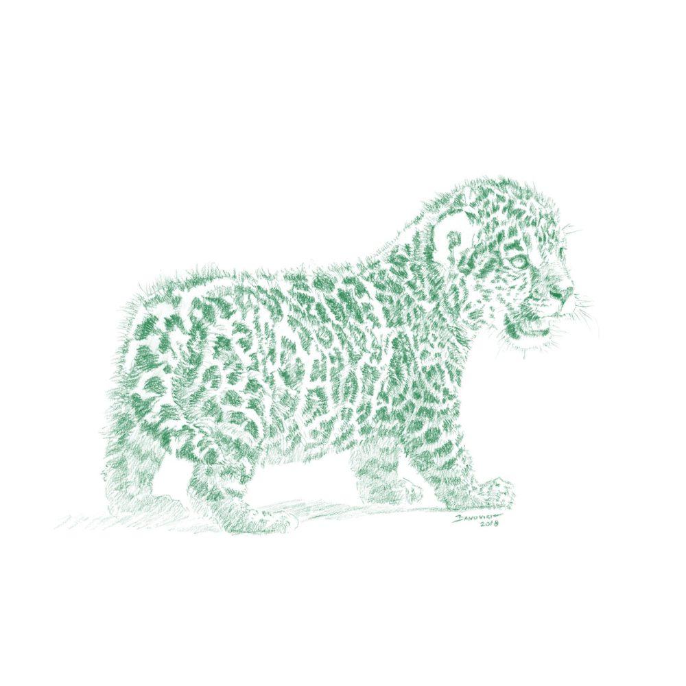 Wild Child - Jaguar - John Banovich