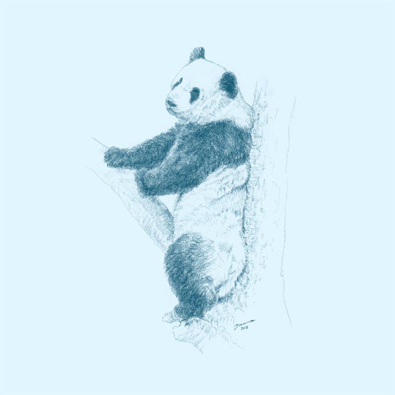 Wild Child - Panda - John Banovich