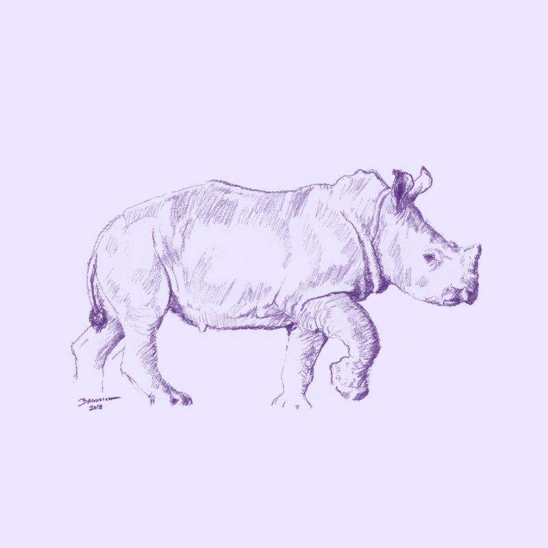 Wild Child - Rhino - John Banovich