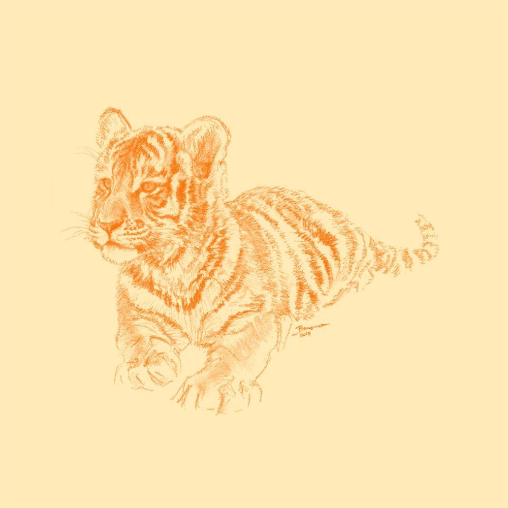 Wild Child - Tiger - John Banovich