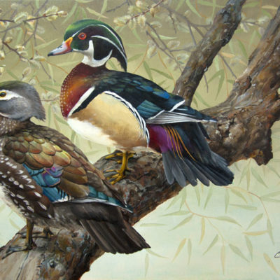Willows and Wood Ducks - Charity Dakin