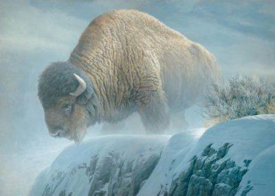Winter Bison - Robert Bateman
