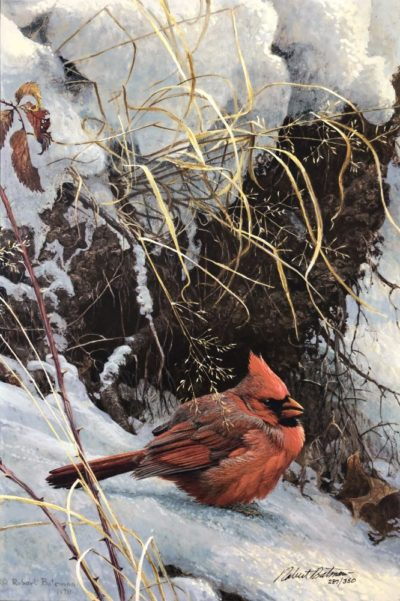Winter Cardinal - Robert Bateman