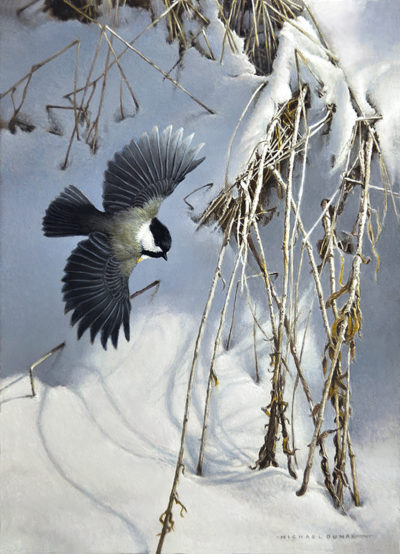 Winter Drift - Black-capped Chickadee - Michael Dumas
