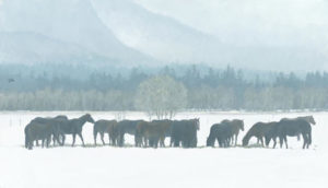 Winter Gathering - Horse Herd - Robert Bateman