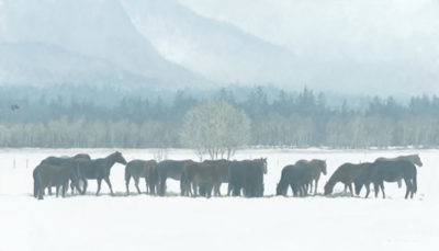 Winter Gathering - Horse Herd - Robert Bateman