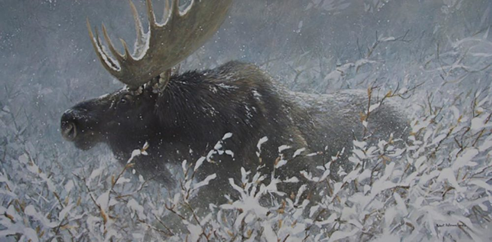 Winter Run - Bull Moose - Robert Bateman