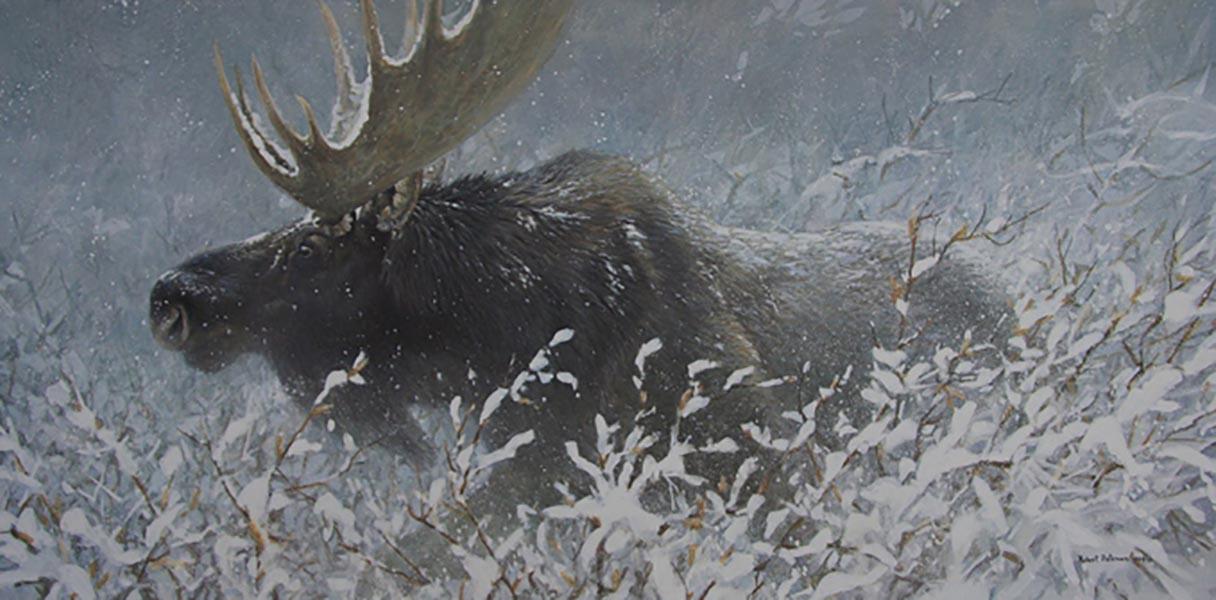 Winter Run - Bull Moose - Robert Bateman