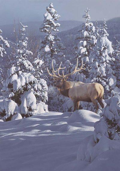 Winter Sundance - Daniel Smith