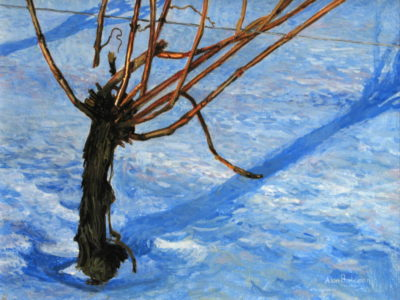 Winter Vineyard Alan Bateman