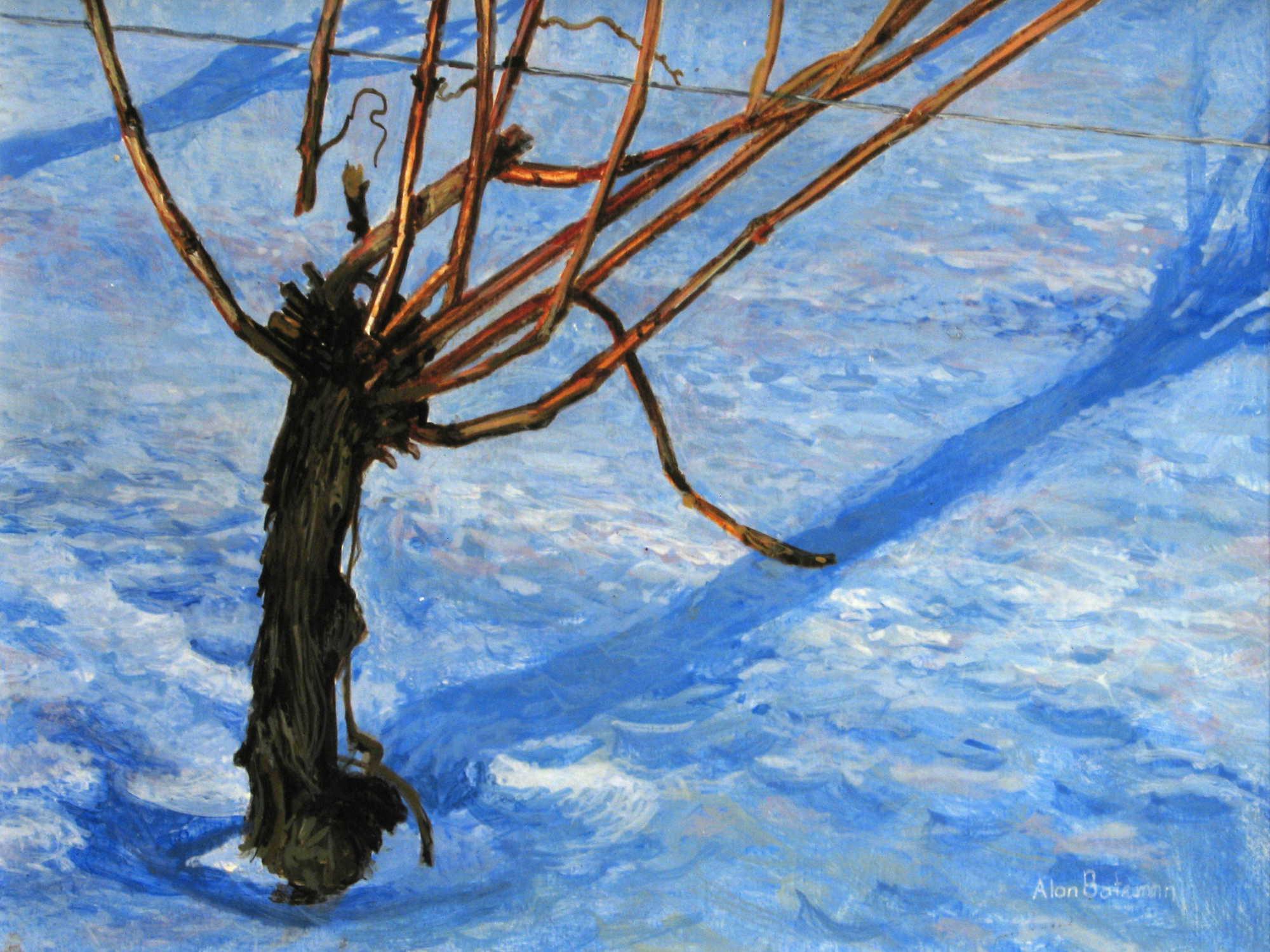 Winter Vineyard Alan Bateman