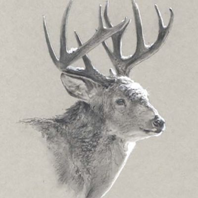 Winter Whitetail - Charity Dakin
