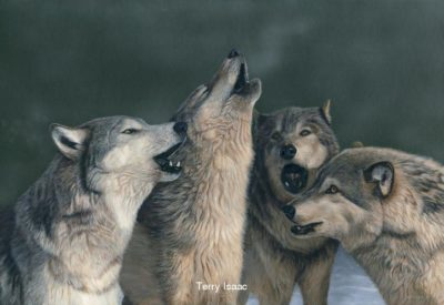 Wolf Song Terry Isaac