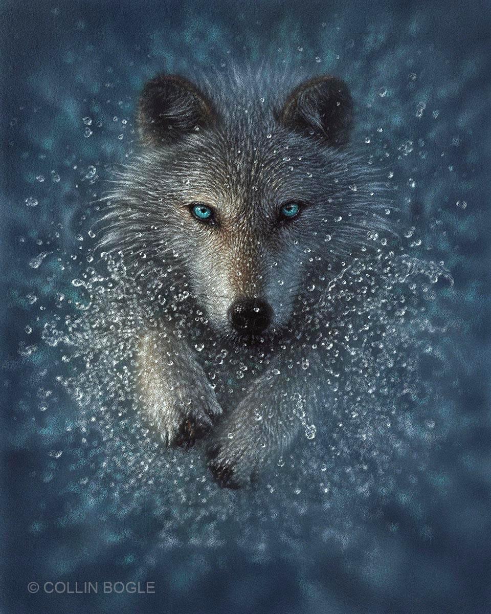 Wolf Splash - Collin Bogle