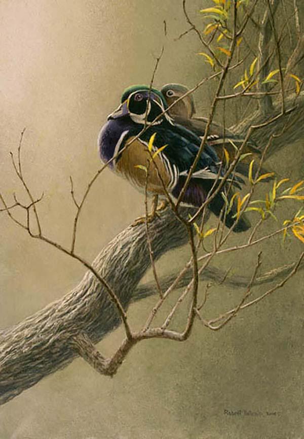 Wood Duck Pair in Willow - Robert Bateman