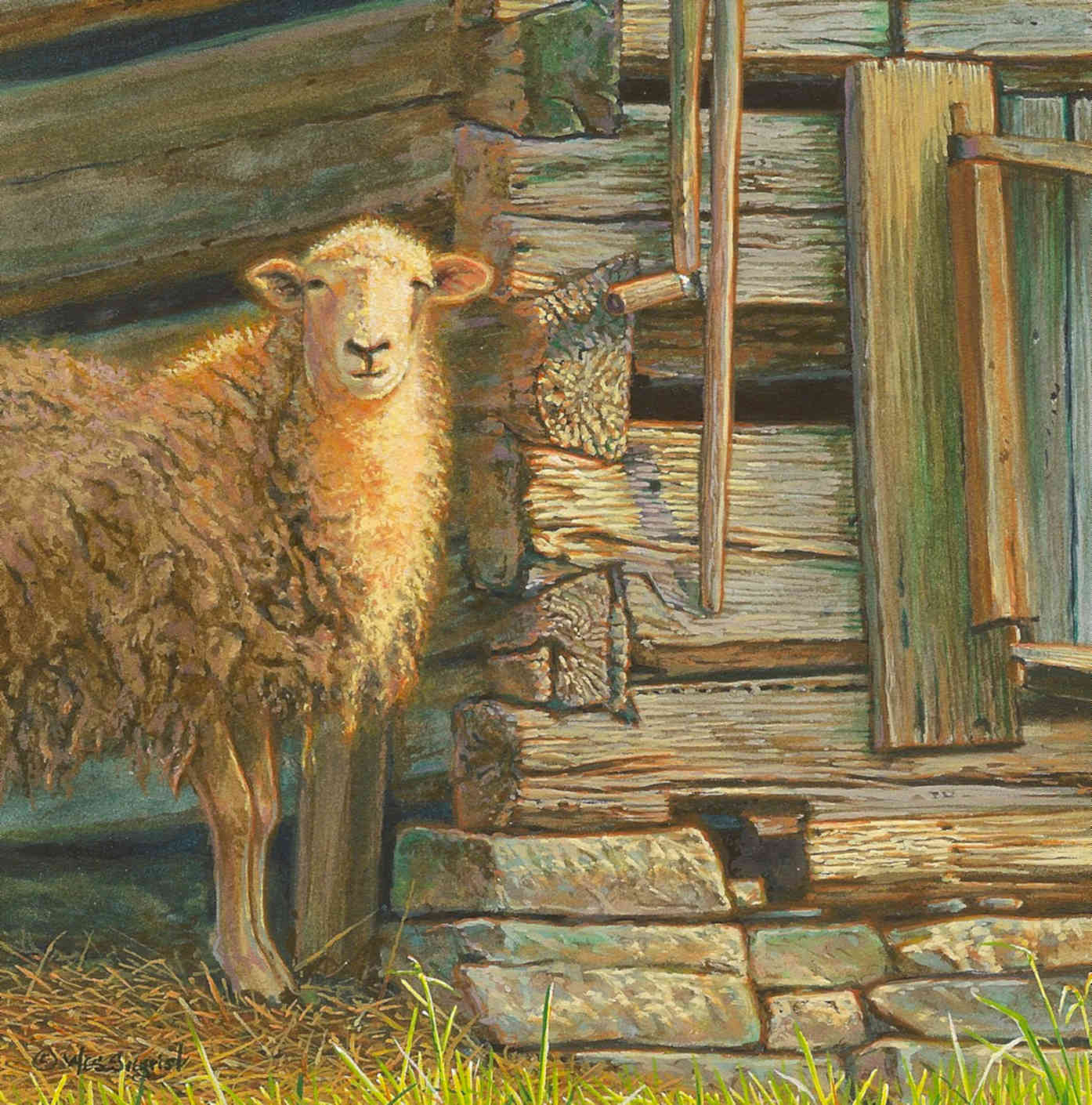 Wooly, Warmed And Weathered Wes Siegrist