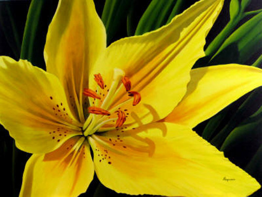 Yellow Lily Dennis Magnusson
