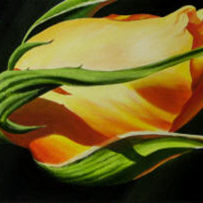 Yellow Rose Bud Dennis Magnusson