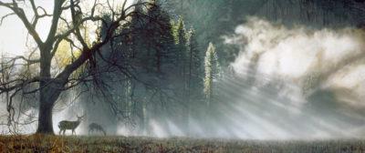 Yosemite Dawn Terry Isaac