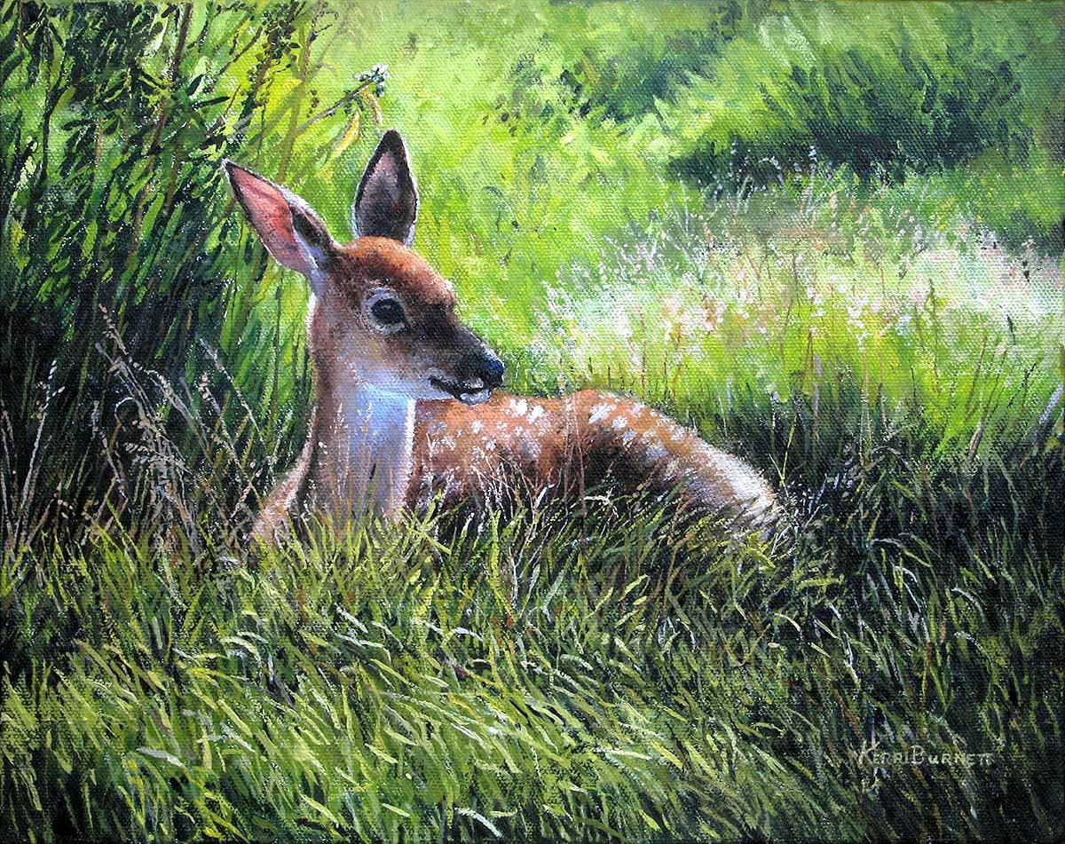 Young Whitetail in Grass - Kerri Burnett