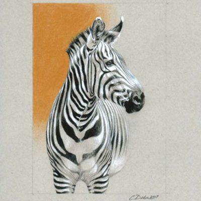 Zebra - Charity Dakin