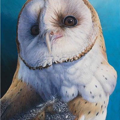 Larger than Life - Barn Owl - David N. Kitler