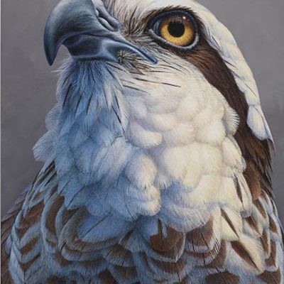 Larger than Life - Osprey - David N. Kitler